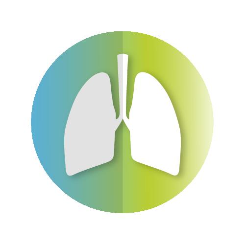 Ademhalingsstelsel